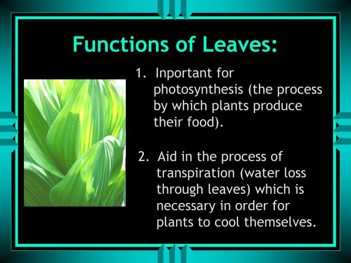 Functions of Leaves: