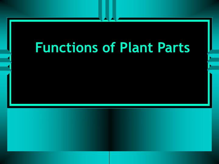 Functions of Plant Parts
