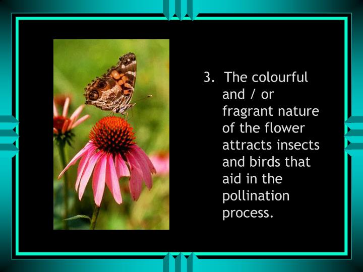 3.  The colourful and / or fragrant nature of the flower attracts insects and birds that aid in the pollination process.