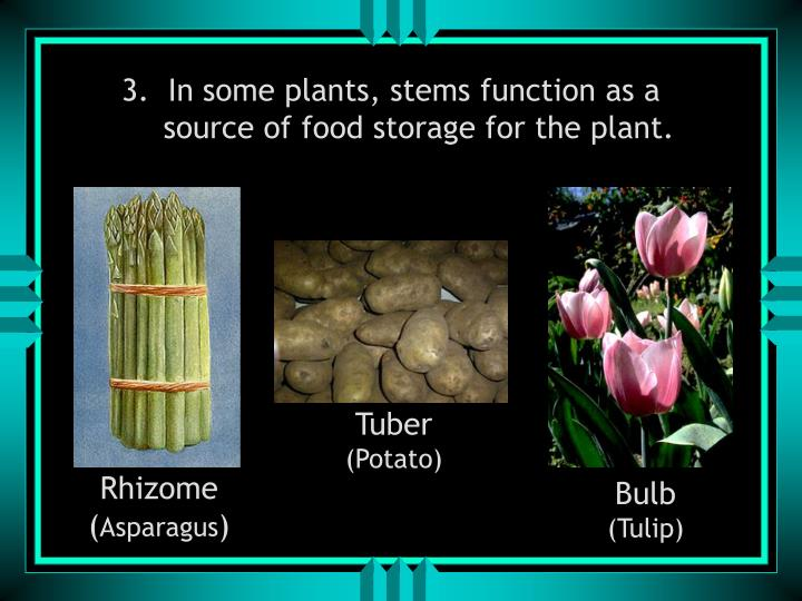 3.  In some plants, stems function as a