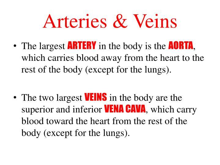 Arteries & Veins