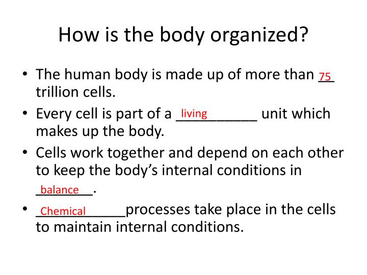 How is the body organized
