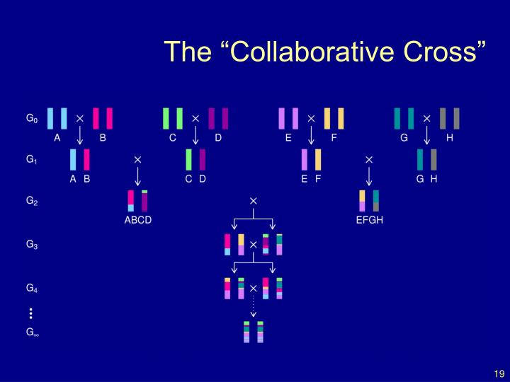 "The ""Collaborative Cross"""