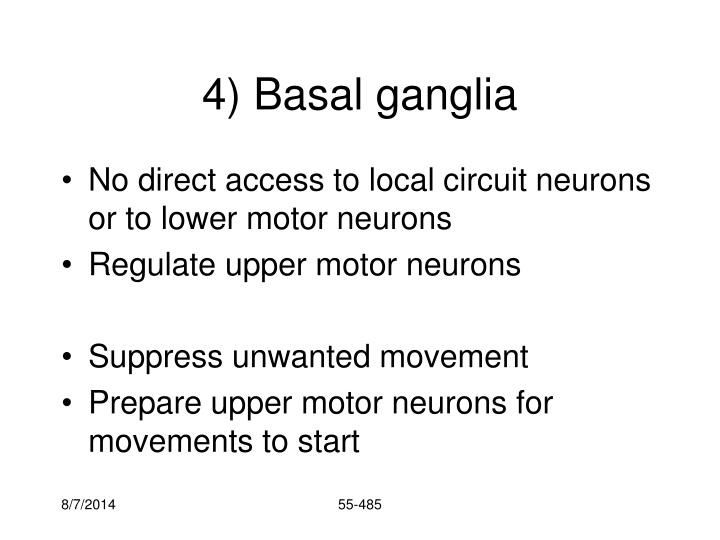 4) Basal ganglia