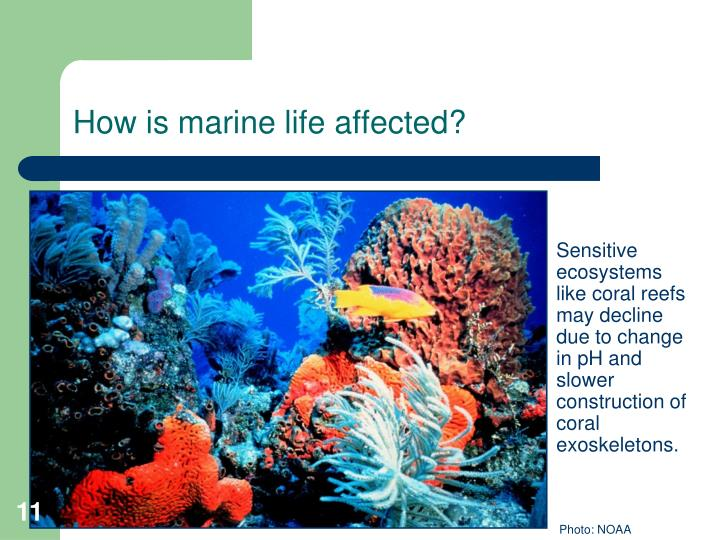 How is marine life affected?
