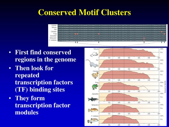 Conserved Motif Clusters