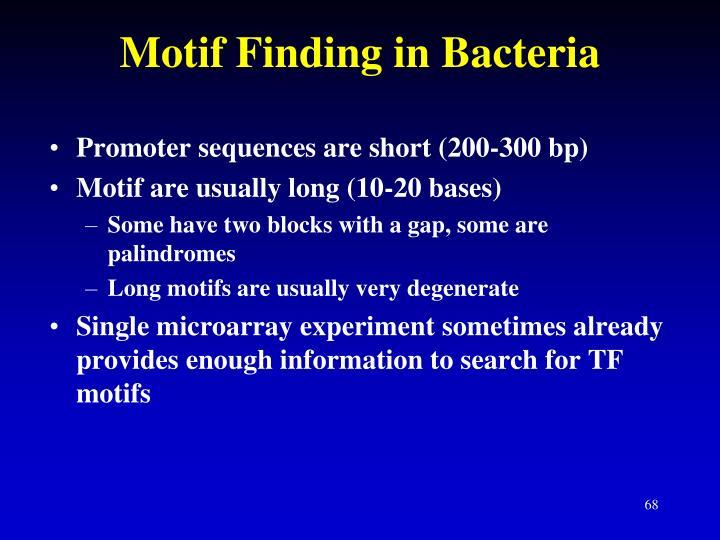 Motif Finding in Bacteria