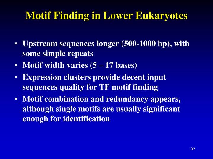 Motif Finding in Lower Eukaryotes