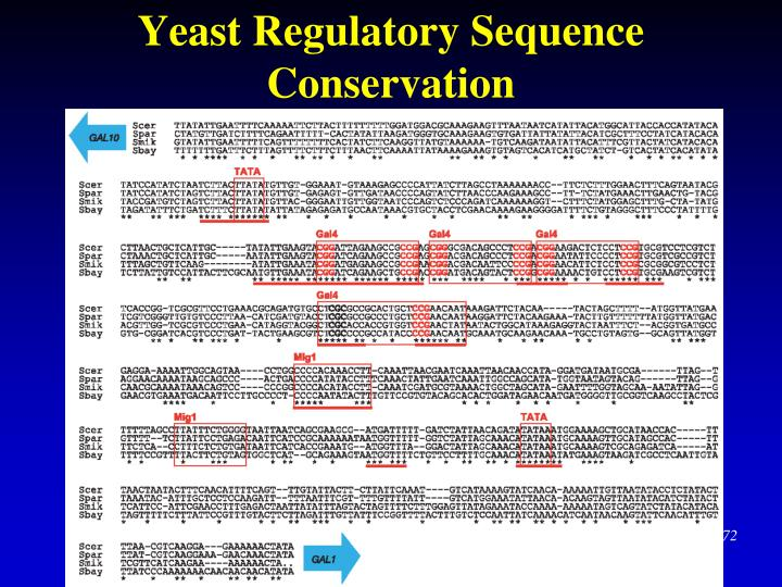 Yeast Regulatory Sequence Conservation