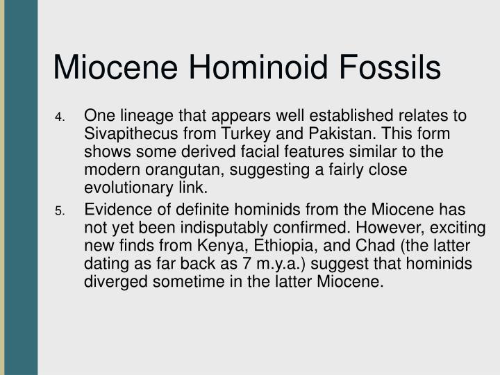 Miocene Hominoid Fossils