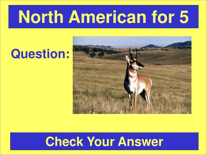 North American for 5