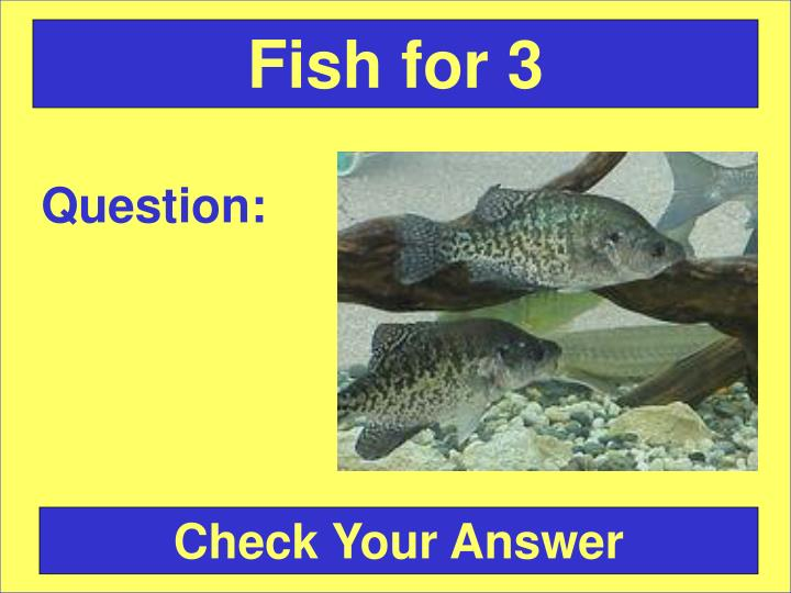 Fish for 3