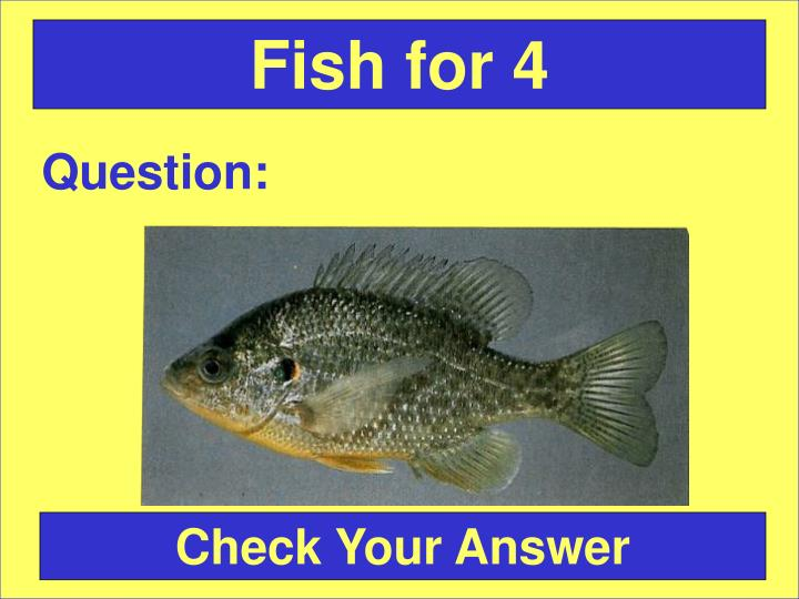 Fish for 4