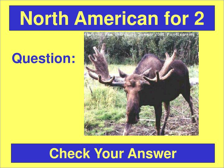 North American for 2