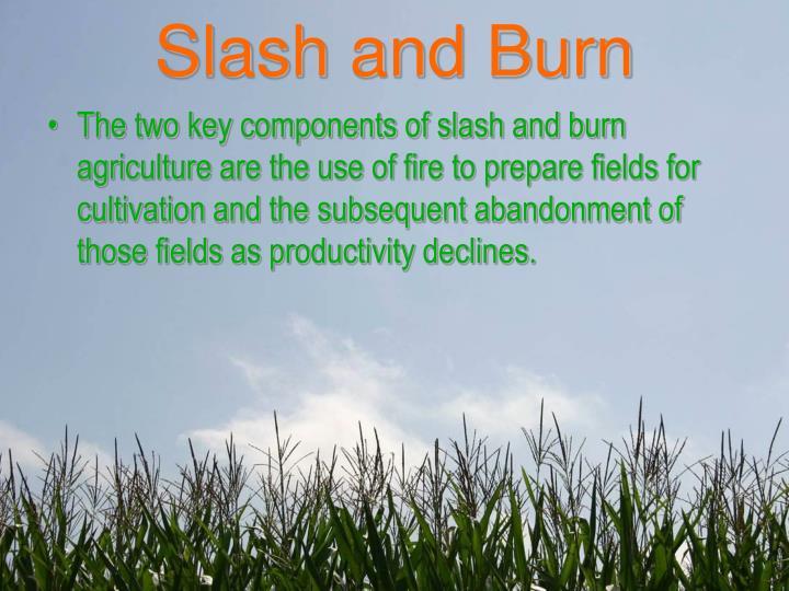 Slash and burn1