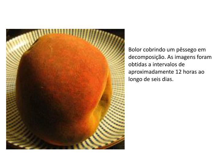 Bolor cobrindo um pêssego em decomposição. As imagens foram obtidas a intervalos de aproximadamente 12 horas ao longo de seis dias.