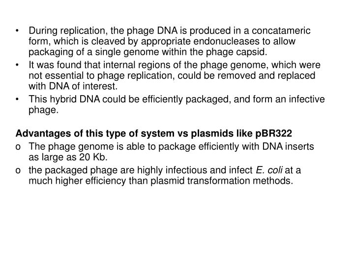 During replication, the phage DNA is produced in a concatameric form, which is cleaved by appropriate endonucleases to allow packaging of a single genome within the phage capsid.
