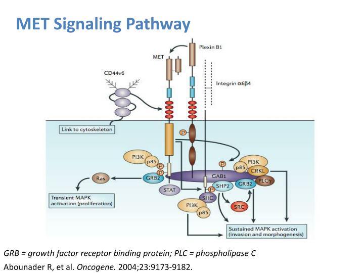 MET Signaling Pathway