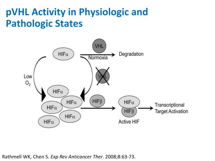 pVHL Activity in Physiologic and