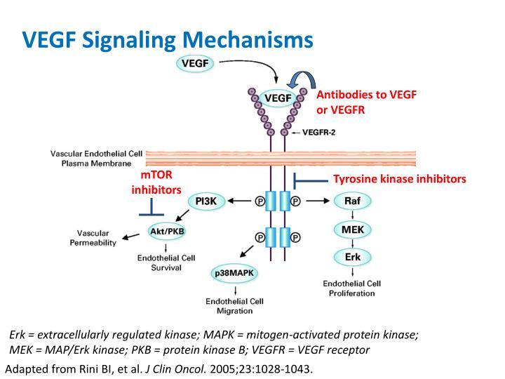 VEGF Signaling Mechanisms