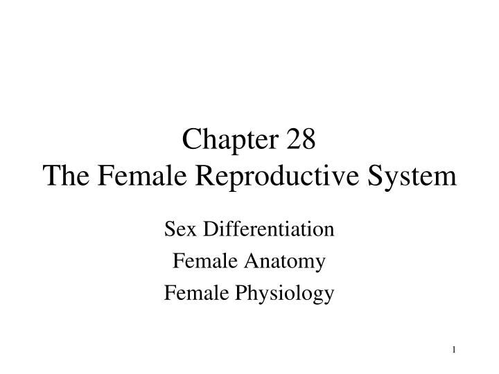 chapter 28 the female reproductive system n.