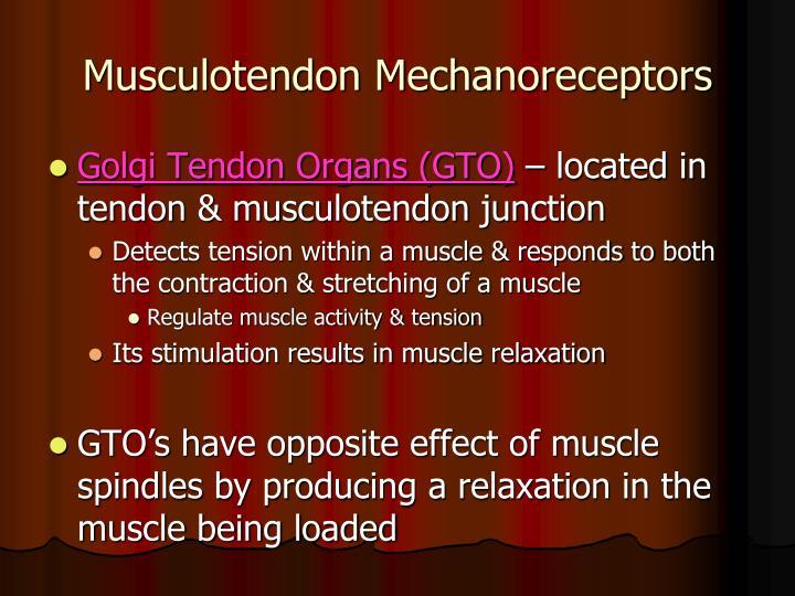 Musculotendon Mechanoreceptors