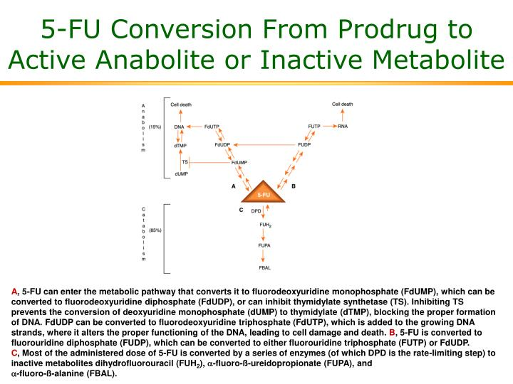 5-FU Conversion From Prodrug to Active Anabolite or Inactive Metabolite