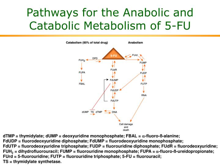 Pathways for the Anabolic and Catabolic Metabolism of 5-FU