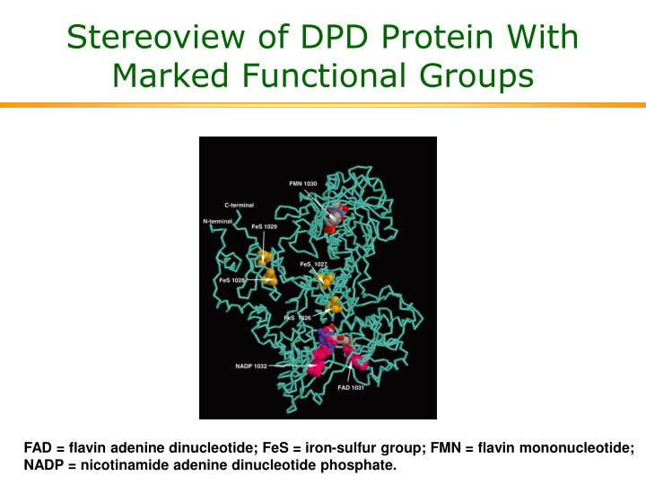 Stereoview of DPD Protein With Marked Functional Groups