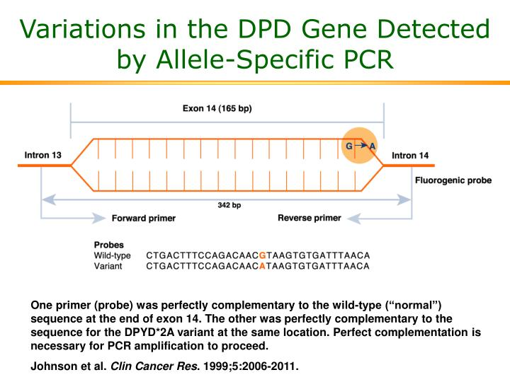 Variations in the DPD Gene Detected by Allele-Specific PCR