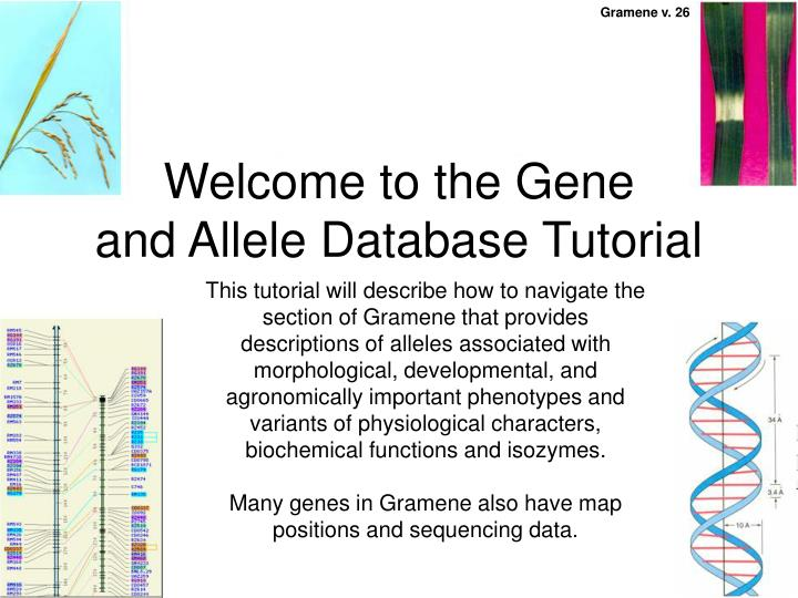 Welcome to the gene and allele database tutorial