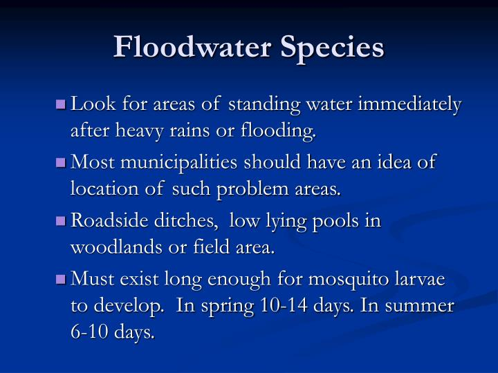 Floodwater Species