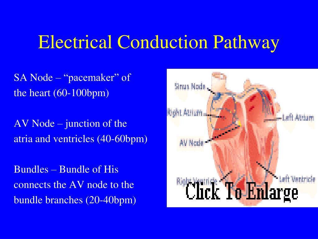 PPT - BASIC ECG PowerPoint Presentation, free download ...