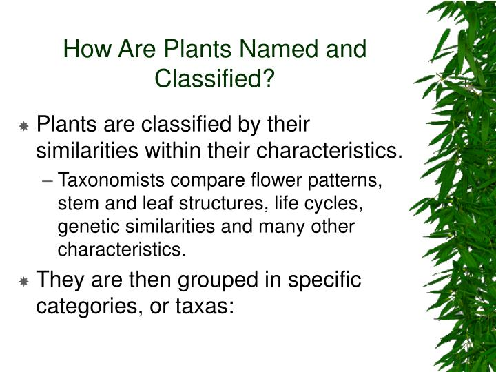 How Are Plants Named and Classified?