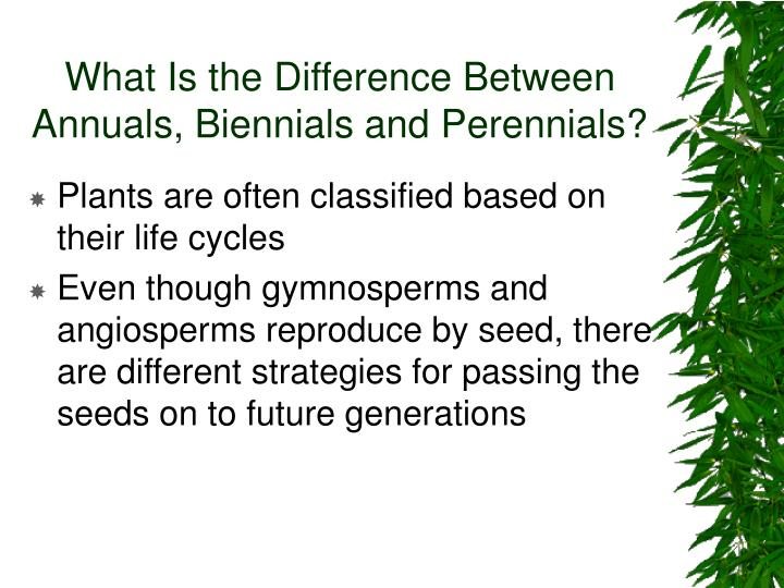 What Is the Difference Between Annuals, Biennials and Perennials?