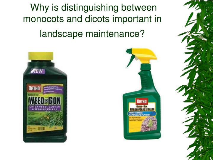 Why is distinguishing between monocots and dicots important in landscape maintenance?