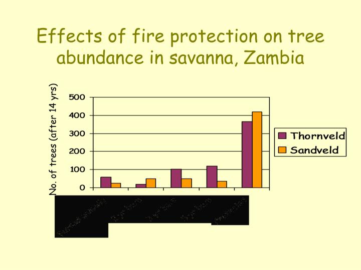 Effects of fire protection on tree abundance in savanna, Zambia