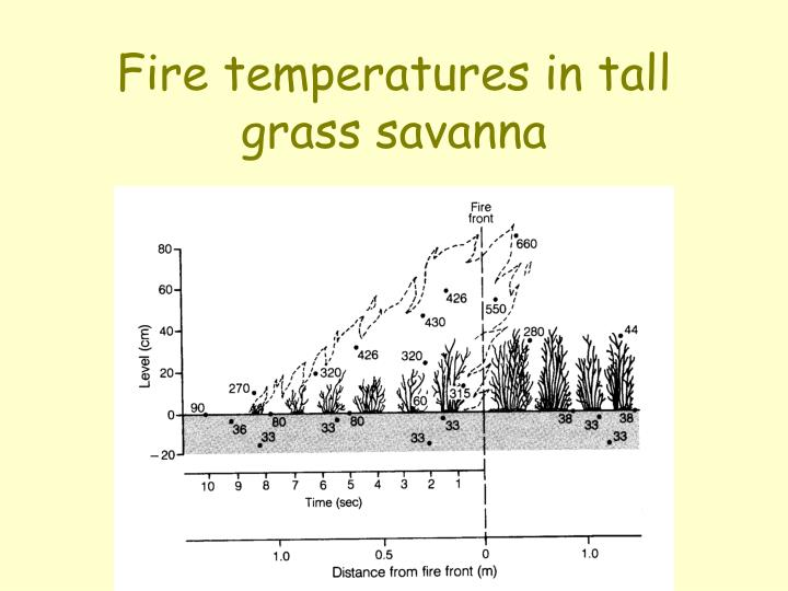 Fire temperatures in tall grass savanna