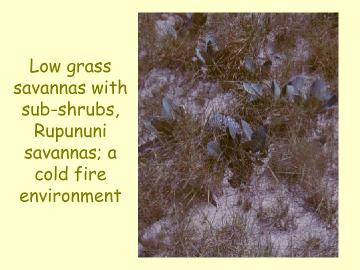 Low grass savannas with sub-shrubs, Rupununi savannas; a cold fire environment