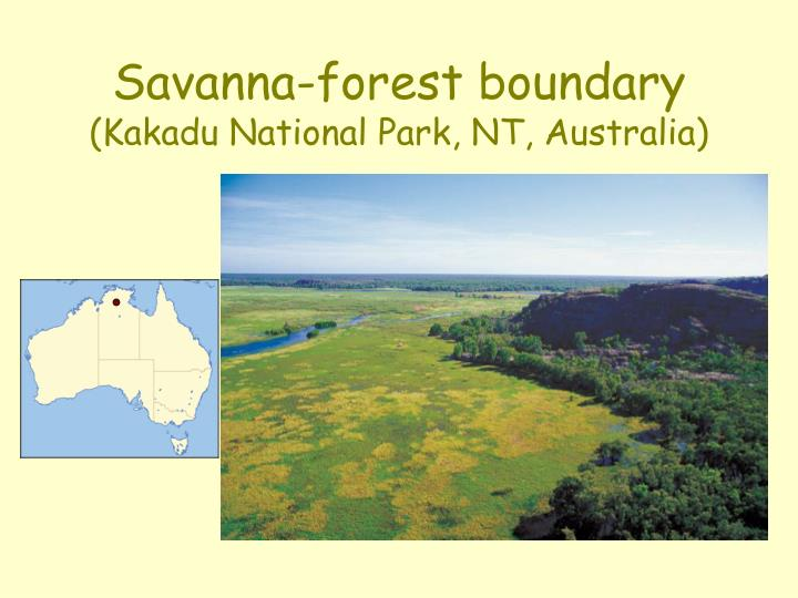 Savanna-forest boundary