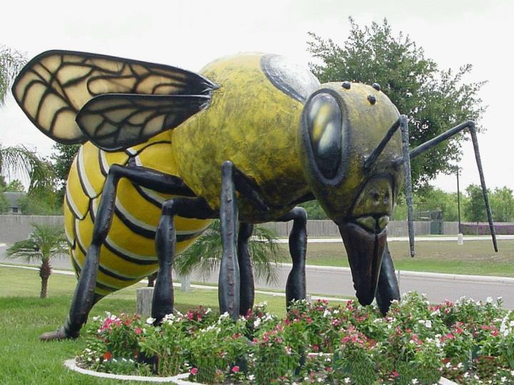 An Entomological Perspective