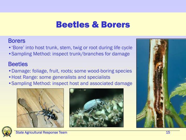 Beetles & Borers