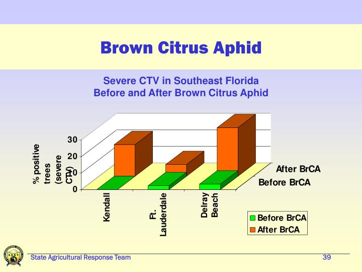 Brown Citrus Aphid