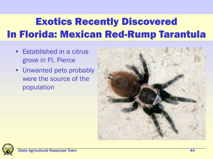 Exotics Recently Discovered