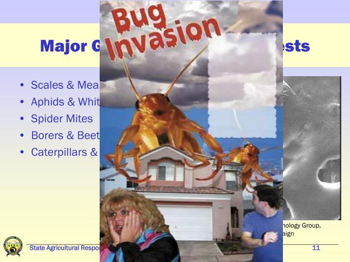 Major Groups of Arthropod Pests