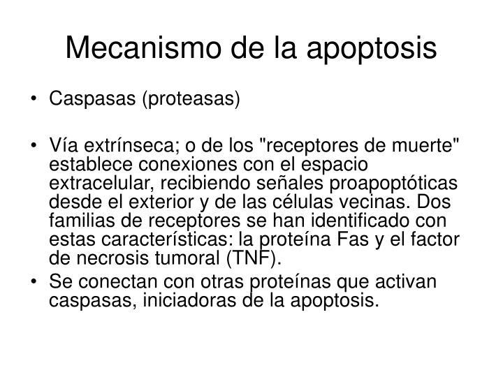 Mecanismo de la apoptosis