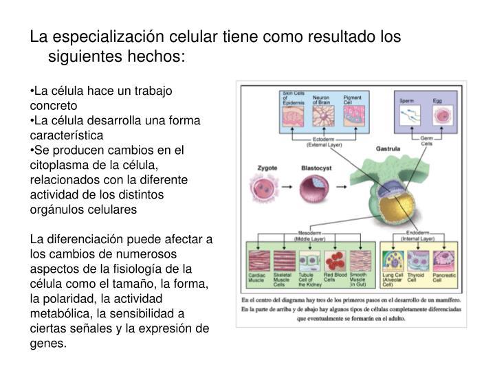 La célula hace un trabajo concreto