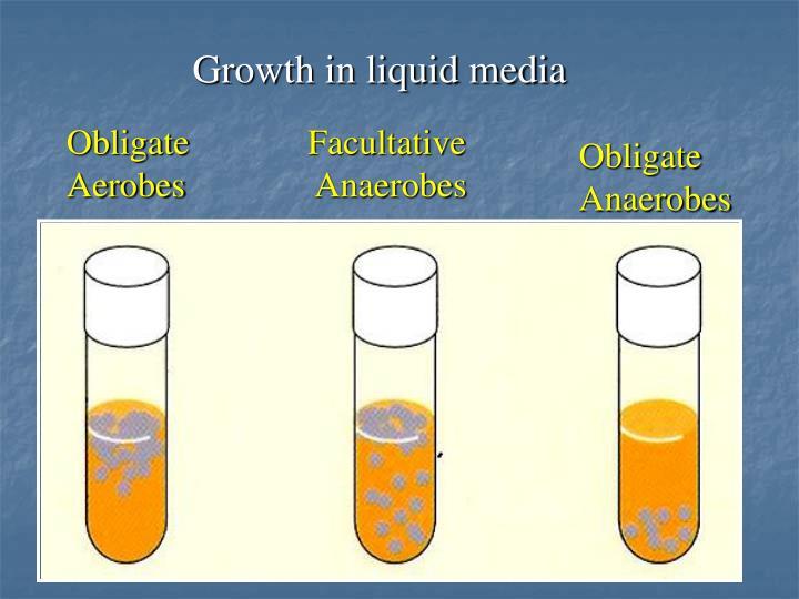 Growth in liquid media