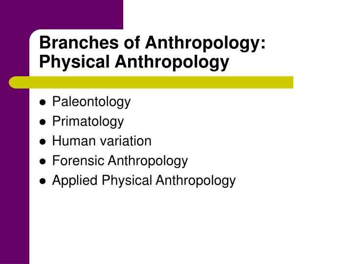 branches of physical anthropology