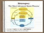 heterospory the most advanced spore process